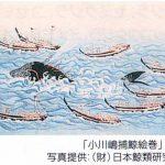 捕鯨の歴史:小川嶋捕鯨絵巻
