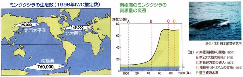 ミンククジラの増加
